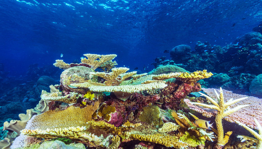 Great Barrier Reef – Pro Dive – March 2017